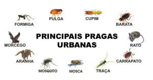 pragas_urbanas_em_S_o_Paulo