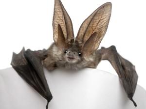 4-morcego-think_700