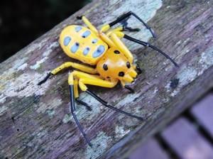 Aranha-caranguejo